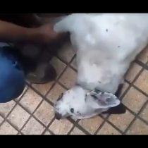 [VIDEO] Detienen a hombre por matar a un perro a patadas en pleno centro de Antofagasta