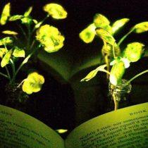 Plantas que brillan como luciérnagas, la nueva apuesta de los científicos del MIT