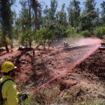 Los daños de las plantaciones forestales en diferentes lagos de Chile