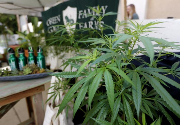 L.A. joing: California da vía libre al negocio de la marihuana recreativa