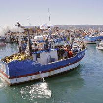WWF Chile manifestó preocupación por retraso del Proyecto de Ley para la Modernización de Sernapesca