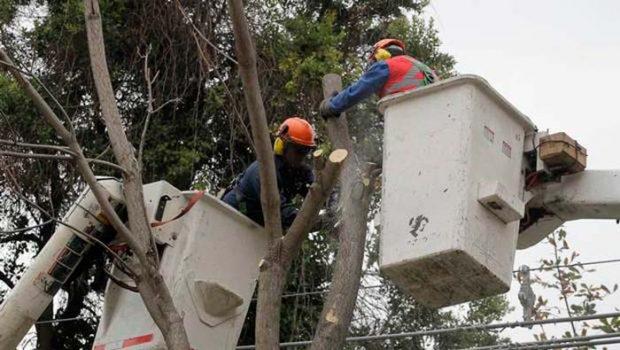 Corte falla contra CGE y le prohíbe corte o poda de árboles