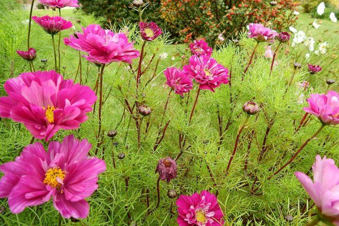 Científicos resuelven el «abominable misterio» de las plantas con flores