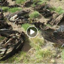[VIDEO] Conmoción por hallazgo de 34 cóndores muertos en Mendoza: se investiga envenenamiento