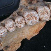 El sorprendente descubrimiento de un fósil que cambia la historia de los primeros humanos