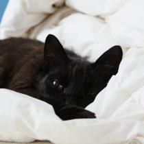 Mujer estuvo 2 meses muerta en su casa y fue encontrada junto a su gato en Valparaíso