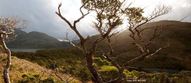Medioambientalistas celebran rechazo a tronaduras para explotación de carbón en Isla Riesco