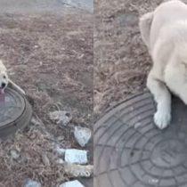 [VIDEO] No todos los héroes usan capa: hombre rescata a perro que había quedado con su lengua pegada en una tapa de alcantarilla