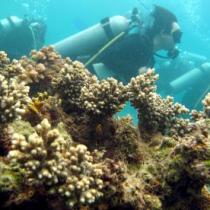 Arrecifes de coral corren peligro a causa del calentamiento global