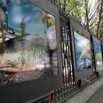 Desgarradora exposición en México advierte sobre extinción de las especies