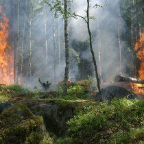 El 99% de los incendios son provocados por el hombre