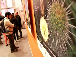 """Exposición""""Flora de Valparaíso"""" en Museo de Historia Natural de Valparaíso"""