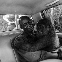 Las conmovedoras imágenes de animales ganadoras del concurso Fotógrafo de Vida Salvaje del Año