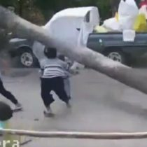 [VIDEO] Por poquito: niño se salva de ser aplastado por una palmera