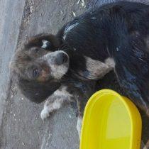 Conmoción en Tucapel por caso de maltrato animal: mujer golpeó a su perro y lo arrojó dentro de un saco a la basura