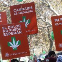 Fundación Daya y Mamá Cultiva gestionan que se impida incautación de plantas de cannabis en caso de prescripción médica
