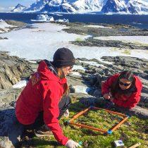 Investigan si planta nativa de la Antártica resistirá el cambio climático