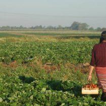 Hacia una nueva imagen del campo chileno