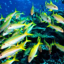 IPBES: Los peces para consumo humano de la región Asia-Pacífico podrían desaparecer en 30 años