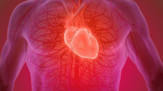 ¿Es posible recuperar un corazón humano después de muerto?