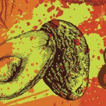 """Cómo la palta pasó de ser """"un anacronismo evolutivo"""" a conquistar el mundo"""