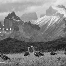 Privada es la blanca montaña: proponen catastro nacional de restricciones de acceso a los cerros de Chile
