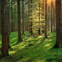 Seguir subsidiando las plantaciones forestales… ¿hasta cuándo?