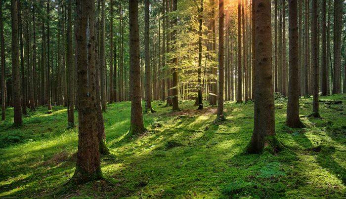 Sentir el bosque: la guía espiritual que promueve la conexión del ser humano con la naturaleza
