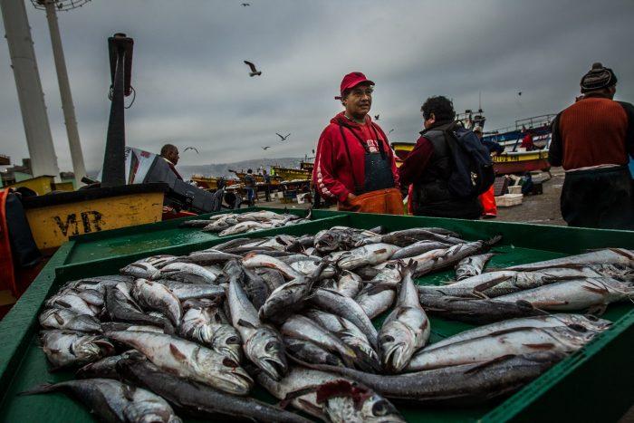 WWF Chile llama al Senado a aprobar proyecto que moderniza Sernapesca