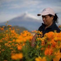 Prodemu y FAO suscribirán convenio para promover el desarrollo integral de mujeres campesinas en todo Chile