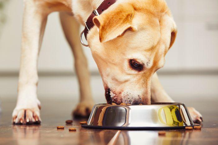 Snacks saludables y alimentos funcionales: las nuevas tendencias en alimentación de mascotas