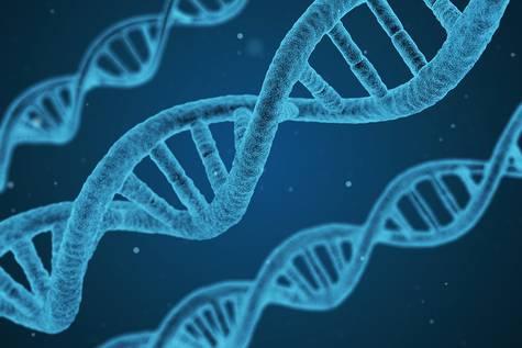 Identifican una señal genética común en la parálisis cerebral y el autismo
