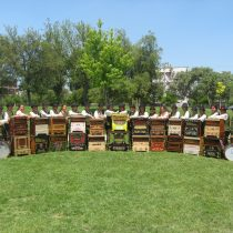 Día del Patrimonio: Chinchineros y organilleros en Plaza de Armas de San Bernardo