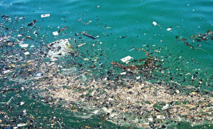 """Greenpeace por hallazgo de microplásticos en centollas: """"El plástico en el mar chileno se está convirtiendo en un problema de salud pública"""""""