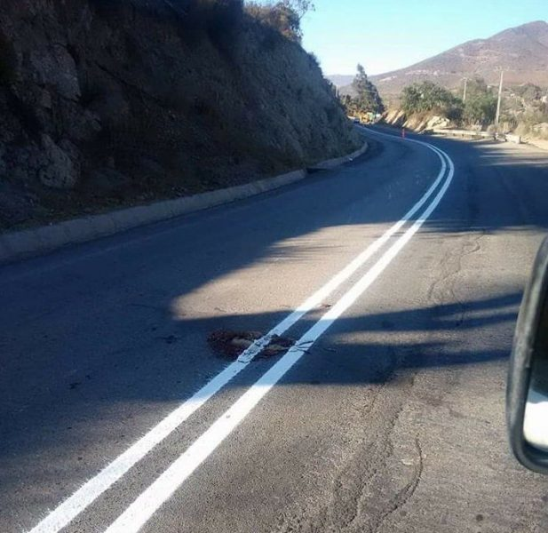 Trabajadores pintan carretera encima de restos de un perro muerto