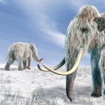 La cada vez más cercana posibilidad de clonar especies de animales extinguidas