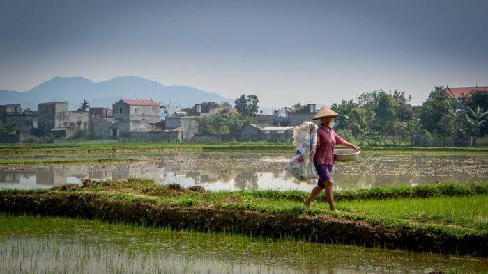El revolucionario método para cultivar alimentos sin necesidad de usar fertilizantes