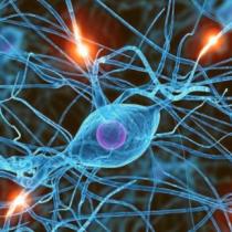 Neurocientíficos investigan cómo comunicarse con pacientes en coma