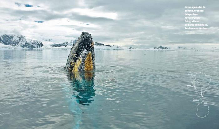 Inhóspita, fría y salvaje: las impresionantes imágenes del nuevo atlas visual de la Antártica de Chile