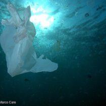 """Greenpeace y hallazgo de microplásticos en centollas:""""El plástico en el mar chileno se está convirtiendo en un problema de salud pública"""""""