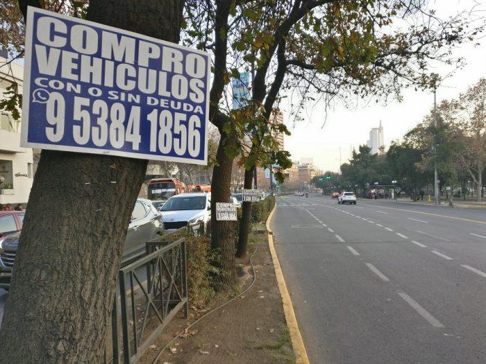 """Greenpeace en el Día Mundial del Árbol:""""Los árboles de Chile se están convirtiendo en verdaderos diarios murales"""""""