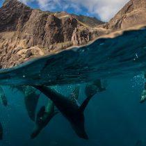"""Especial """"Día mundial de los océanos"""" en National Geographic"""