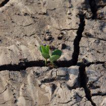 """Tras el día mundial de la lucha contra la desertificación y la sequía:""""Necesitamos aprender a administrar el recurso hídrico"""""""