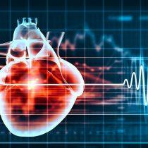 Científica de centro de estudios chileno descubre rol clave de proteína en el funcionamiento del corazón