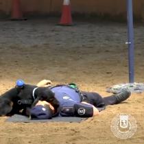 Poncho: el perro policía que hace RCP en España