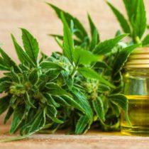 El circo legislativo de la cannabis medicinal