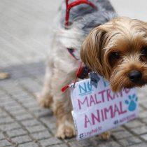 Caso Simón: penalista llama a denunciar casos de maltrato animal porque