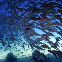 Impulsan iniciativa para proteger una superficie marina equivalente al doble del territorio de EEUU