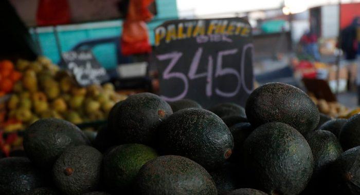 Oro verde: productores de palta chilenos viajan a Europa para enfrentar acusaciones sobre sequía en Petorca