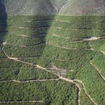 Plantaciones de paltos: la carencia de una legislación para el uso del suelo